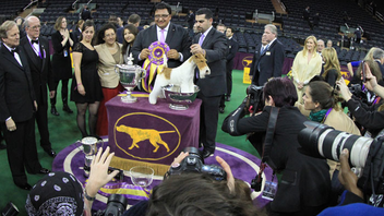 New York #8 Sports Event The show is America's second-longest continuously held sporting event, behind the Kentucky Derby, and creates instant stars out of its winners, like this year's Sky, a wire fox terrier. Next: February 16-17, 2015