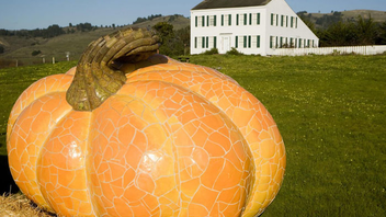 """#13 Parade, Holiday Event & Fair Held on Main Street in Half Moon Bay—known as """"the world pumpkin capital""""—the event is 44 years old. It includes enormous pumpkins on display, harvest-inspired crafts, three stages of live entertainment, and a lot of pumpkin pie. In 2014, a highlight was the world's largest mosaic pumpkin sculpture, which was created by artist Peter Hazel and weighed 100,000 pounds. Next: October 17-18, 2015"""