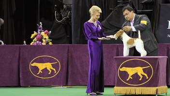 "#3 Sports Event (up from #5) This is the venerable dog show's first year running co-located with the American Kennel Club's Meet the Breeds. The extended ""Westminster Week"" also includes an agility competition for the second year in a row. Next: February 2016"