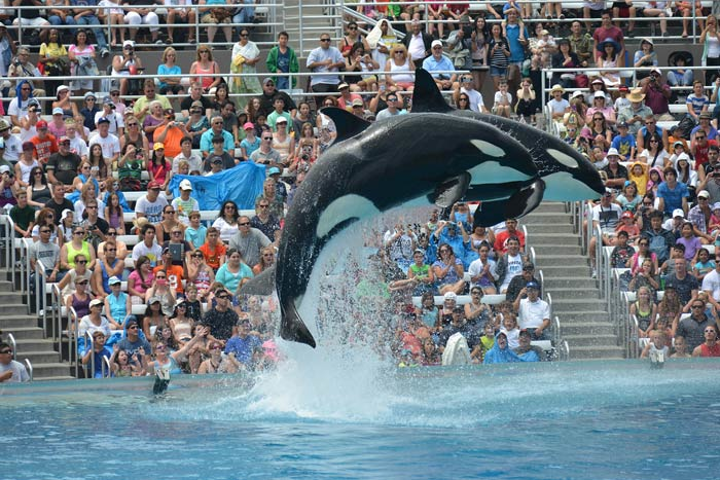 SeaWorld announced it would phase out its traditional Shamu show by 2017.