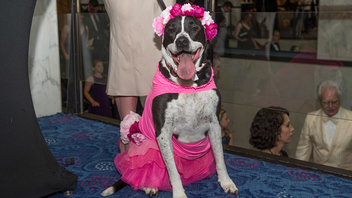 #24 Benefit (up from #25) Held June 11 at the Washington Hilton, the 29th annual Bark Ball welcomed more than 1,000 guests and about 500 dogs in support of the Humane Rescue Alliance, formerly known as the Washington Humane Society. The black-tie gala raised more than $580,000, and included celebrity guests Bob Dole and Elizabeth Dole, as well as Washington Redskins players Kirk Cousins and Dustin Hopkins. The Emanuel J. Friedman Philanthropies and the Friedman-French Foundation returned as the Canine Champion Sponsor. The Ralph & Frances Dweck Family Foundation, ExxonMobil, and the National Association of Manufacturers were Leader of the Pack sponsors. Design Foundry oversaw the stage design. Next: June 17, 2017