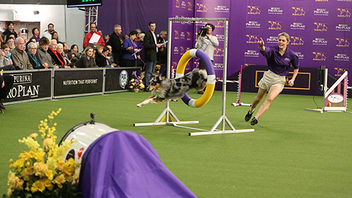 #3 Sports Event In 2017, the Westminster Kennel Club made headlines when it welcomed cats into the mix for the first time. More than 3,000 canines participate in the event, which just wrapped up its 141st annual show. Events take place in Madison Square Garden and at Piers 92 and 94. Next: February 12-13, 2018