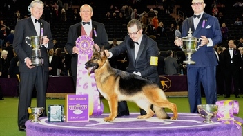#3 Sports Event More than 3,000 dogs from around the world competed in the 142nd annual Westminster Kennel Club Dog Show, which was attended by 20,000 spectators in February 2018. The show takes place over several days at Piers 92 and 94 and Madison Square Garden. Next: Winter 2019