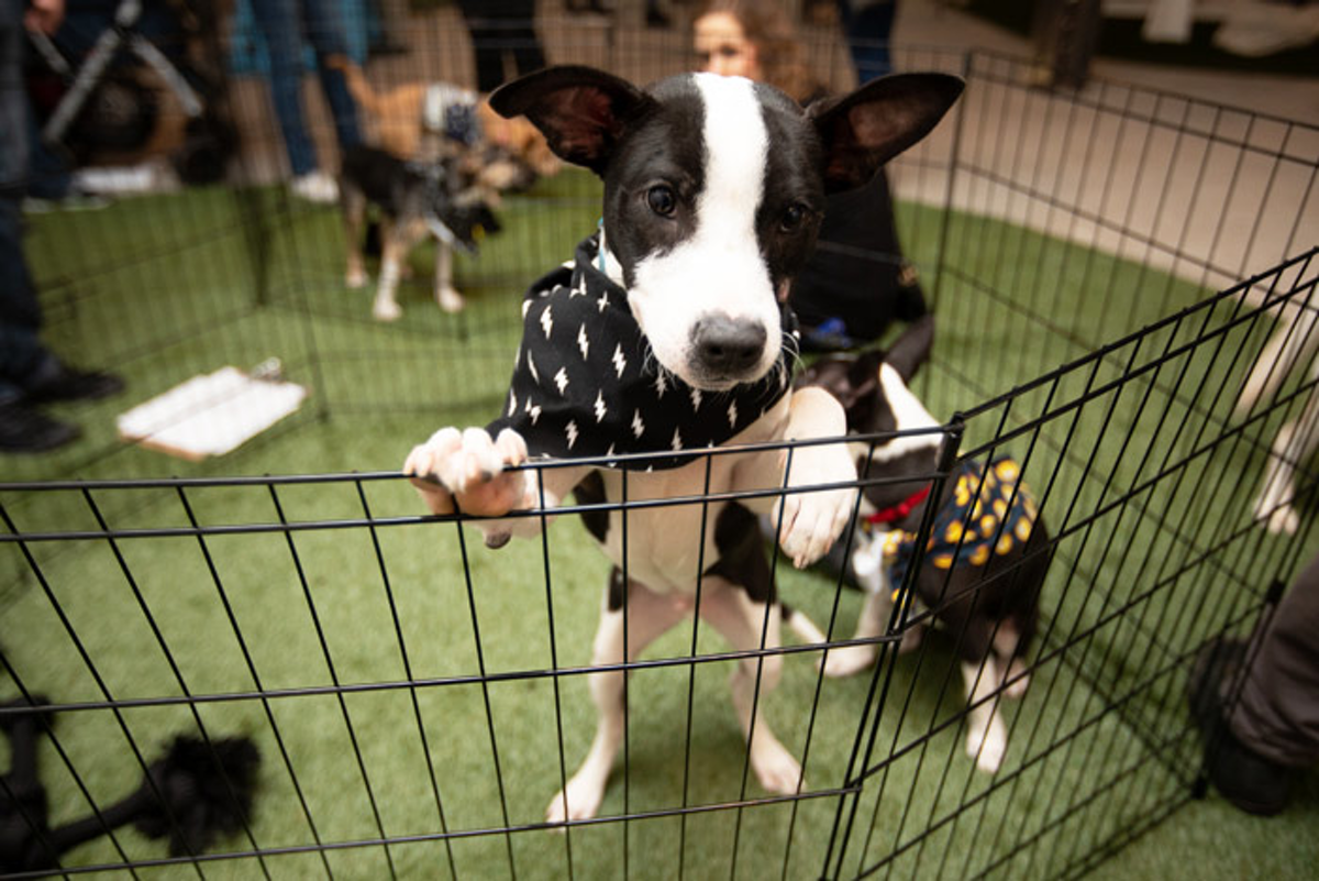 19 Fetching Ideas From These Dog Friendly Events Bizbash