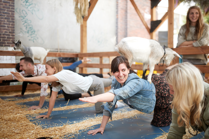 One of the first C2 Village experiences guests encountered was goat yoga.