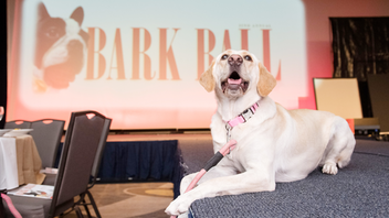 Up from #22 More than 1,400 guests—about 400 of whom were furry and four-legged—gathered at the Washington Hilton for this year's Bark Ball. The event raised over $686,000 for the Humane Rescue Alliance, $168,000 of which came from a live auction that included tickets to see the Washington Nationals in the World Series. Among noteworthy attendees were former Senators Bob and Elizabeth Dole, and Roberta McCain, mother of the late Senator John McCain. Next: Fall 2020