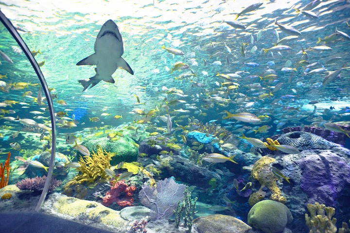 After canceling its regular programming and annual March Break camp program, Ripley's Aquarium of Canada launched a live web camera experience to allow people to experience the aquarium from home.